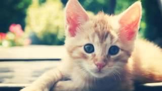 Киски и котятки (коты и кошки)