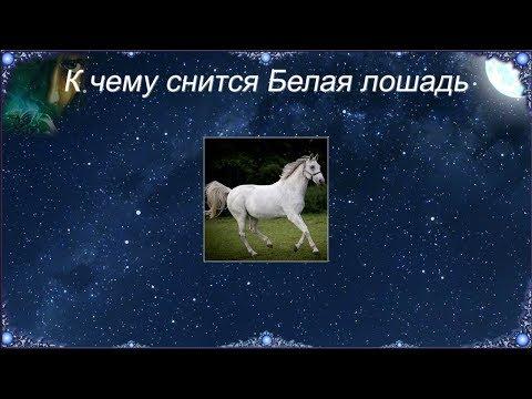 К чему снится Белая лошадь (Сонник)