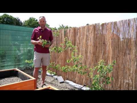 HDZ 09 2015 Úžitkovo- oddychová záhrada