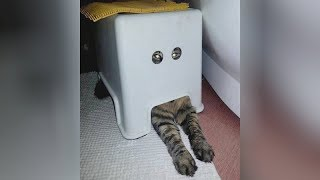 Watch and STOP LAUGHING IF YOU CAN! - Super HILARIOUS ANIMALS