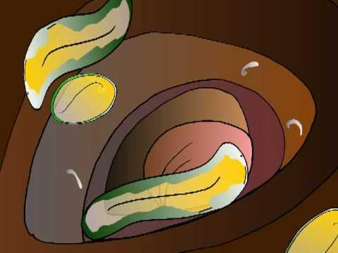 Von den Würmern der Knoblauch und der Beifuß