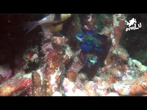 Yap - Mandarin Dive, Mandarinfish Ledge (Rainbow Reef),Mikronesien