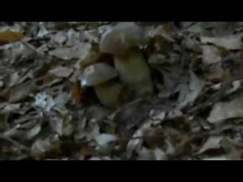 Trattamento di Dnipropetrovsk di un fungo di unghie