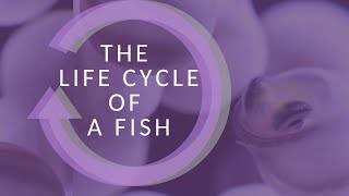 The Life Cycle Of A Fish