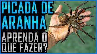 Picada de Aranha - O que Fazer?
