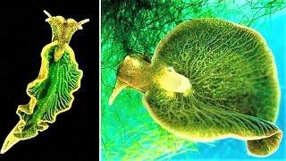10 Underwater Creatures with WEIRD Abilities