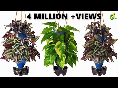 Plants Growing In Plastic Bottles/ bottle Planter/Recycle plastic Bottle Into Planter/ORGANIC GARDEN