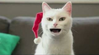 Уникално - Котка пее коледна песничка (смях)!!!
