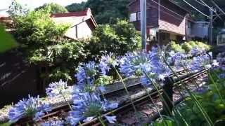 江ノ電と紫陽花、アガパンサス/長谷駅周辺