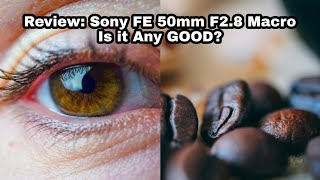 Review: Sony FE 50mm F2.8 Macro | Is it any GOOD?