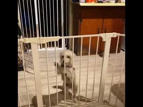 Riley, an adoptable Terrier Mix in Glendora, CA