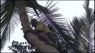 preview picture of video 'Kokusnuss-Akrobat Sansibar'