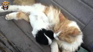 смешные кошки до слез!