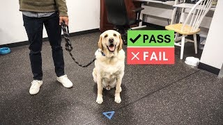 Had to take an EXAM!!! Therapy dog test
