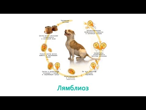 Лямблиоз. Ветеринарная клиника Био-Вет.
