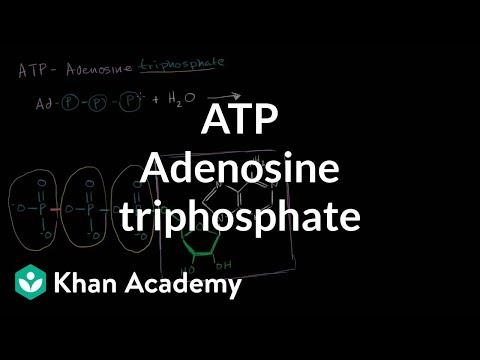 ATP: Adenosine triphosphate (video) | Khan Academy