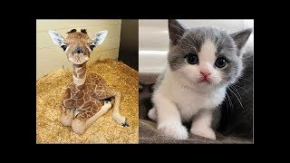 So many cute kittens videos compilation 2018 #1 - FunnyAnimals