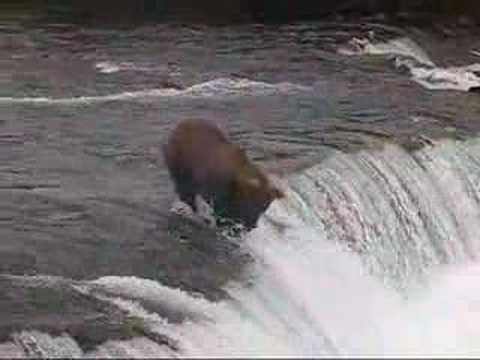 La pesca nel video di regione di Rostov su una pesce gatto