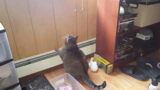 Too Fat to Cat - Video Youtube