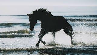Happier || Equestrian Music Video