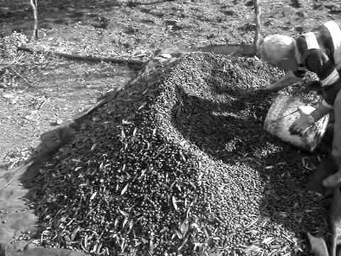 Trattamento efficace di aglio di emorroidi