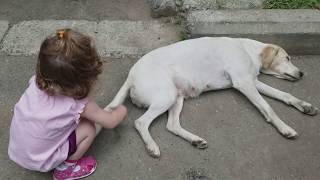 Cute BABY Lile Playing with Dog