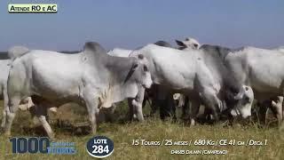 15 touros Nelore PO  (Atende RO e AC)