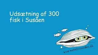Udsætning af 300 elritse i Susåen