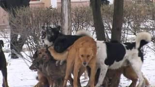 Собачья свадьба в День Св Валентина