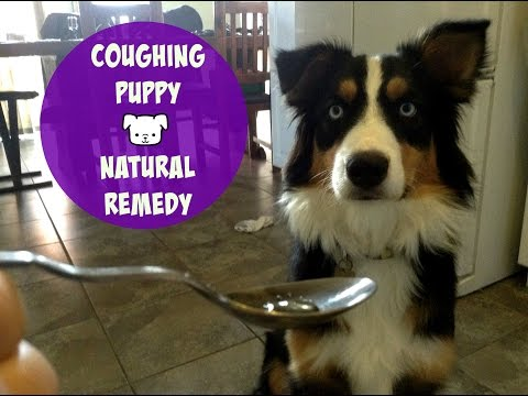 Video Coughing Dog - Natural Remedy