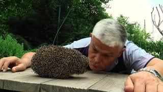 Директор Одесского зоопарка посвятил ежу «оду любви» (видео)
