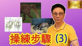 操練步驟 (3) …游水Swimming…膝關節Stifle Joint…腹絞痛 Colic 【梁定華一言堂…2019-2020 馬季前瞻】