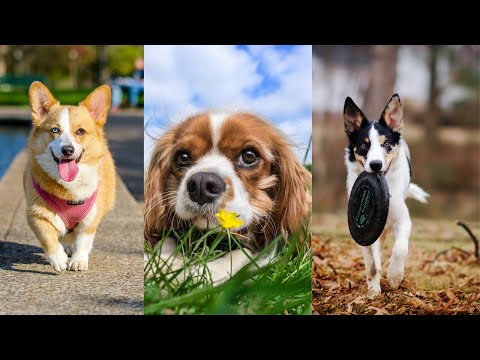 Videos of animals we love Dogs