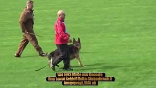 2016 SV BSZS Nuremberg part 1 TSB-Überprüfung Rüden (GHKR) VA