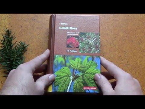 Baumbestimmung mit Bestimmungsbuch (FITSCHEN)