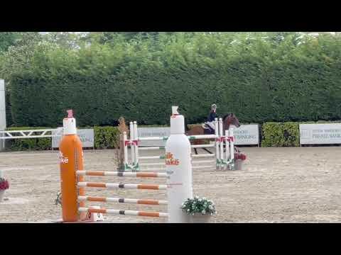 Jument de CSO de 11 ans de 172 cm - « Côte d'Azur »