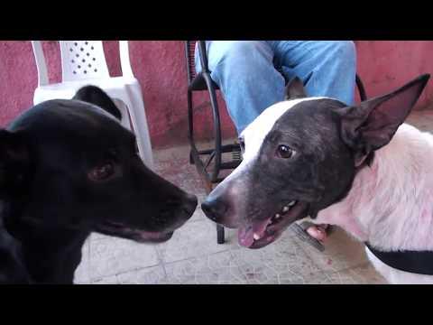 Causa animal. Cão Ceará ganha cadeira de rodas de ONGs em Aracati