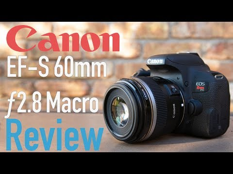 Canon EF-S 60mm f2.8 USM Macro Lens Review