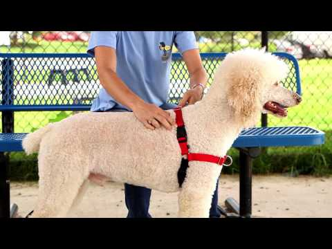 PetSafe—How To Fit The Easy Walk Dog Harness In Under 2 Minutes