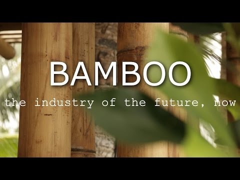BAMBOO - The industry of the future, now