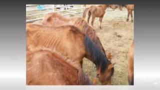 "the ""Nebraska 200"" - Mustangs Rescued from 3-Strikes Ranch"