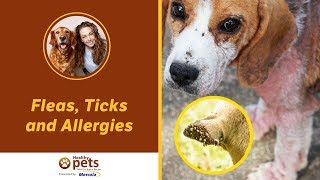 Dr. Beckers Facebook Live Presentation On Fleas, Ticks And Allergies