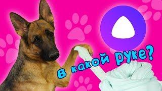 Яндекс Алиса против Эрики! В КАКОЙ РУКЕ? / Собака управляет моим слаймом челлендж