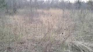 MUSIC - Winter Meadow Before And After Lens Cleaning - Video Youtube