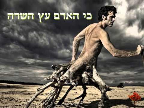שלום חנוך-כי האדם עץ השדה (עם מילים)