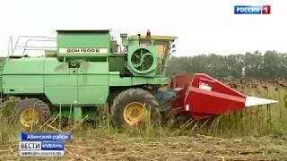 Урожай подсолнухов активно убирают на Кубани
