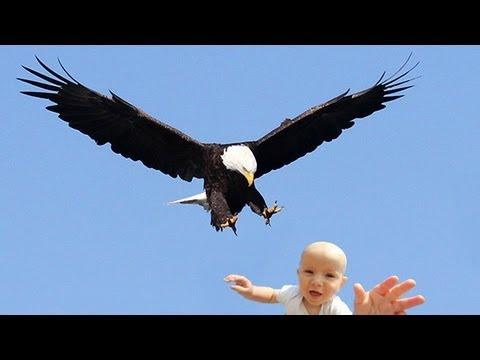 7800 Koleksi Gambar Burung Rajawali Raksasa HD Terbaru