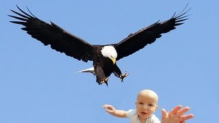 EAGLE SNATCHES KID - Eagle Picks Up Baby, Fake?