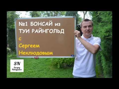 1. Ниваки (садовый бонсай) из туи Райнгольд. Советы от Сергея Неклюдова