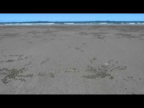 Time Lapse crab sand ritual Yeppoon Australia